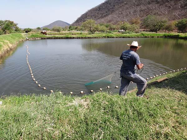 Cicloturismo el organal tlayca morelos zona for Cria de tilapia en estanques plasticos