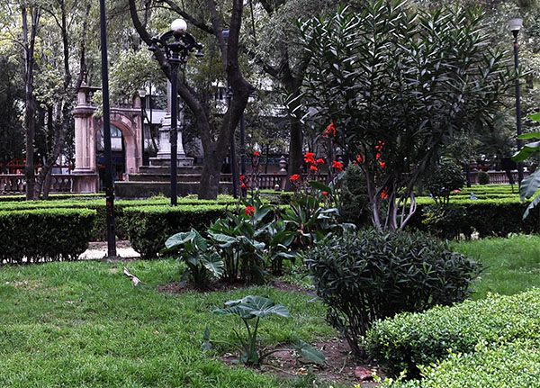 Jardín de Santiago con más de 62 especies de plantas y árboles. Nonoalco-Tlatelolco Alcaldía Cuauhtémoc, Cd. de México, senderismo urbano cultural